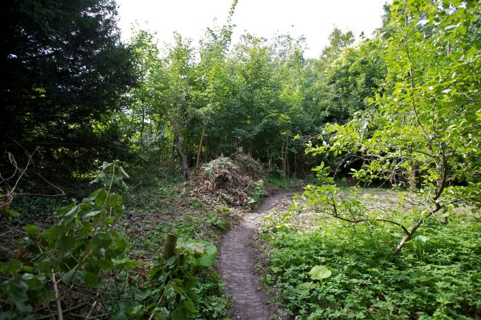 23 August 2012. Brambles and tree seedlings removed, and paths recovered.
