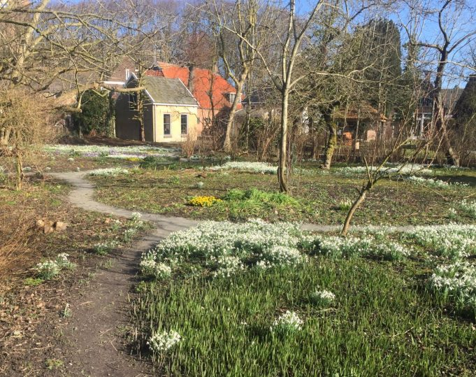 View from the former orchard to the vegetable garden circle with Winter Aconite, Three-cornered Leek and Snowdrops. 1 March 2015.