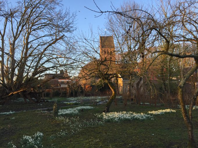 Vegetable garden circle at sunset. Transplanted Snowdrops to connect existing groups are already clearly visible. View line to the St. Vitus church. 3 March 2015.