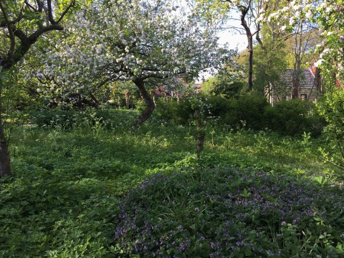'Mondriaan boom' in bloei, omringd met Fluitenkruid en Longkruid