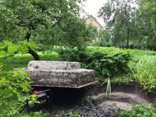 Pond removed. Behind it: Garden Solomon's seal and the 'Mondriaan tree'. 17 August 2015.