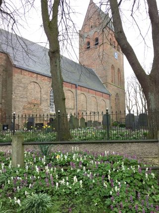 Holwortel op en om  het Sint Vitus kerkhof in Stiens.