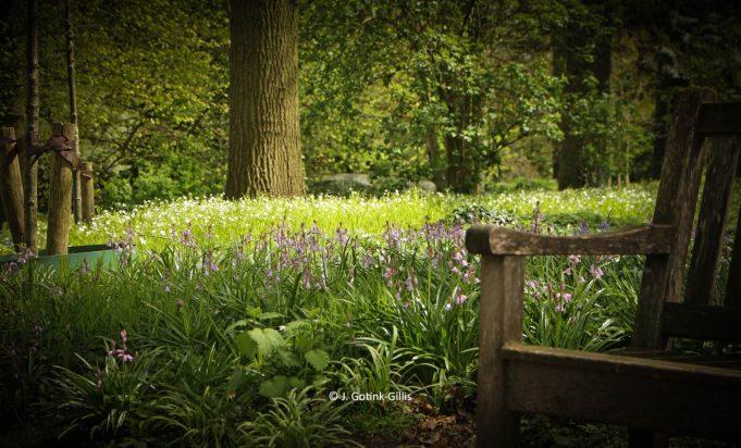 Wilde hyacint en Grote muur op Hackfort.