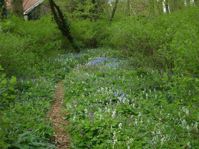 Blauwe anemoon en Holwortel (wit en roze) bij Philippusfenne