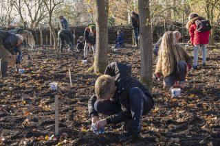 Schoolchildren are planting Bluebells at Martenastate.