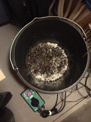 Schimmelkweek ten behoeve van compostthee