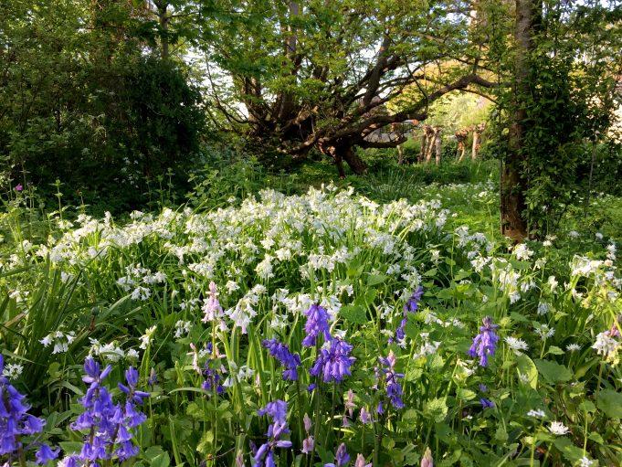 Wilde hyacint en Driekantig look bij Stinze Stiens