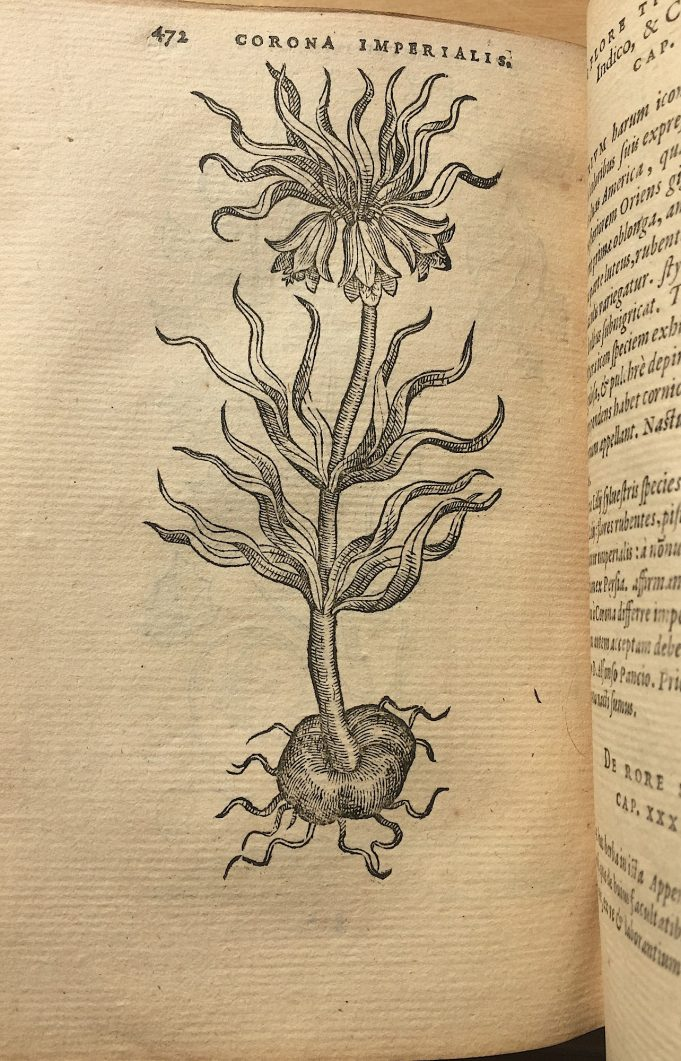 Keizerskroon in: Dodonaeus, Purgantium …, 1574