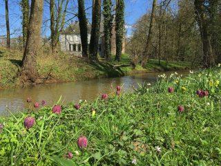 Kievitsbloemen, Bostulp, Bosanemoon, Zomerklokken en Slanke sleutelbloem
