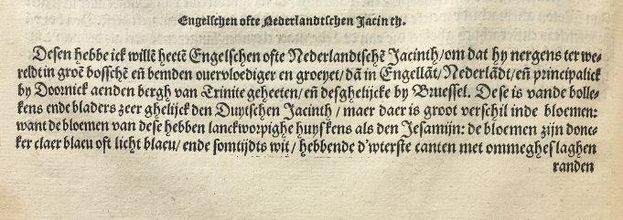 Tekst over de Hyacint in: Matthias de Lobel, Kruydtboeck, Antwerpen 1581