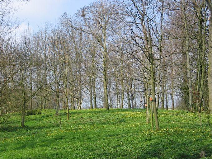 Speenkruid bij Jongemastate. In de bomen Roeken-nesten.