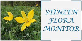 Stinzenflora-monitor