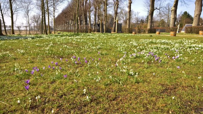 Dutch Crocus in the forecourt at Dekema State.