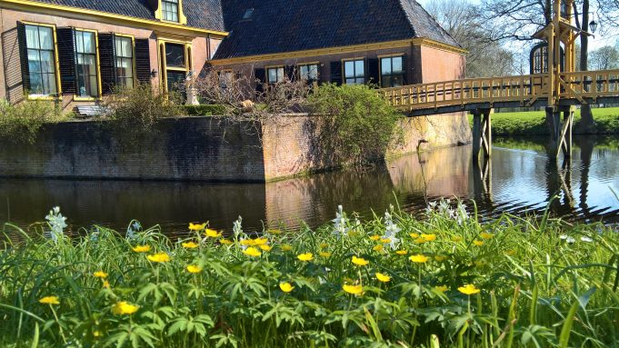 Yellow Anemones and Drooping Star-of-Bethlehem along the canal around Dekema State.