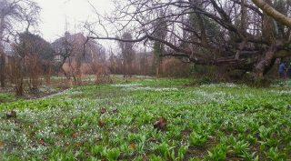 Overzicht tuin stinzenflora tijdens Stinzenstruin 2013