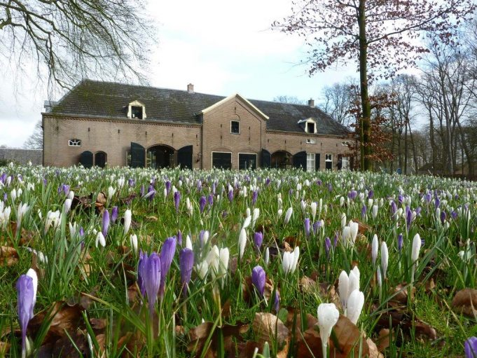 'Dutch crocus' (Crocus vernus) Hackfort, Vorden.